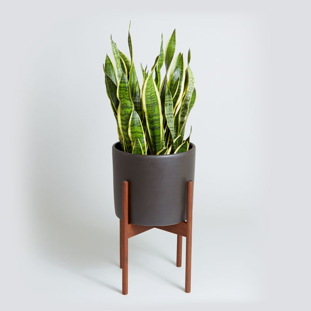 Meet The Ceramic Case Study Planter In Matte Black With Wood Plant