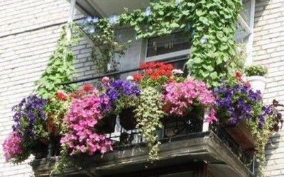 Mini-guida ai fiori da balcone | gardening | Pinterest | Fiori da ...