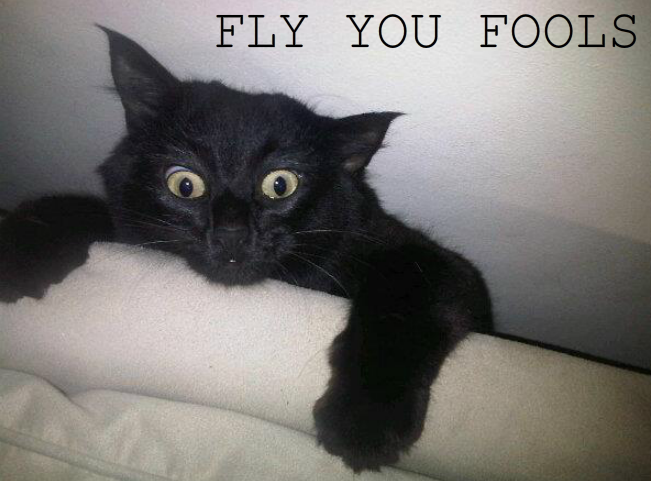 Fly You Fools Funny Cat Memes Funny Cat Pictures Funny Cats