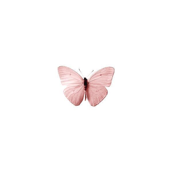 Butterfly Pink Aesthetic Animals Pink