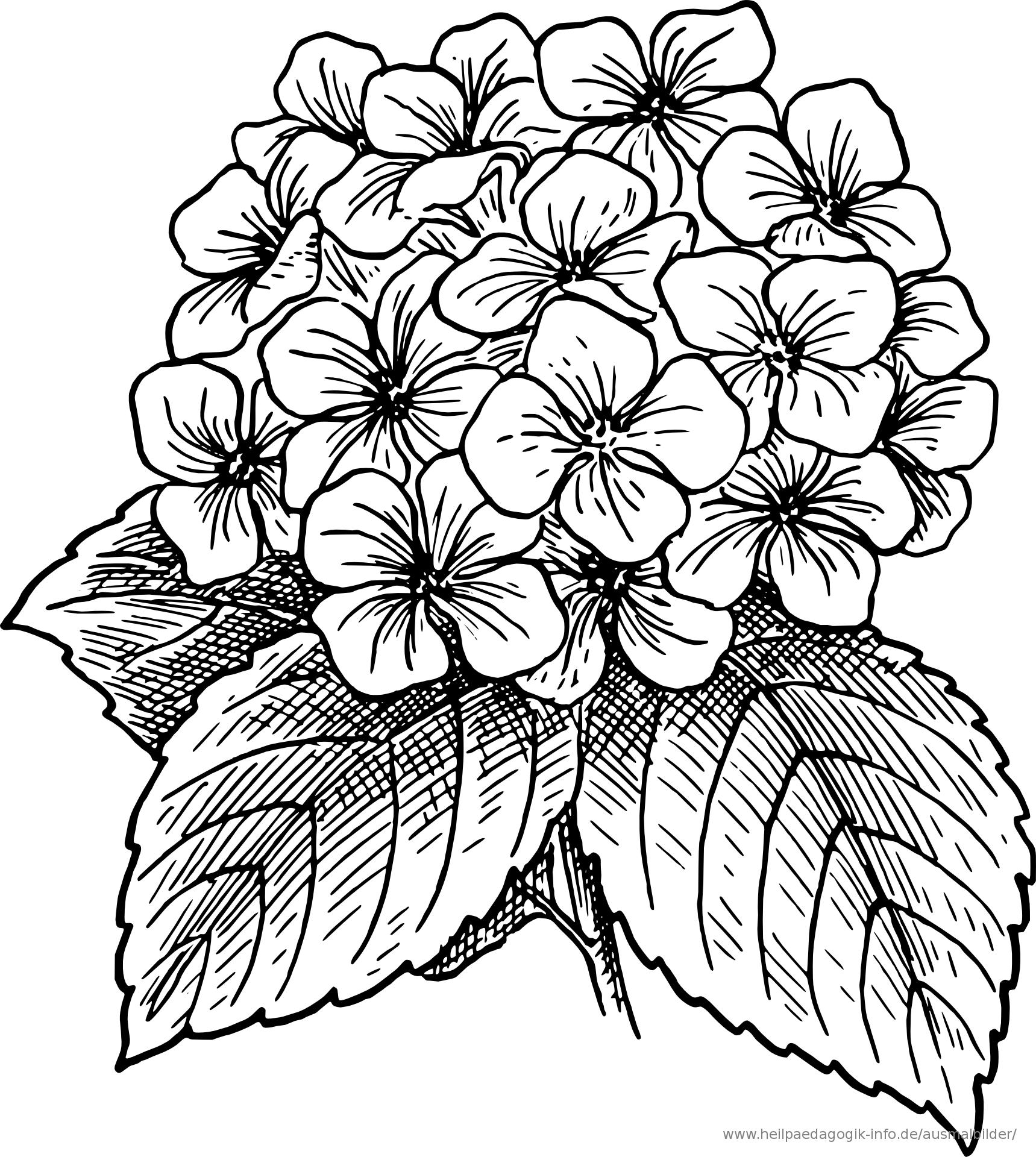 ausmalbild-malvorlage--Blumenstrauss--571 ...