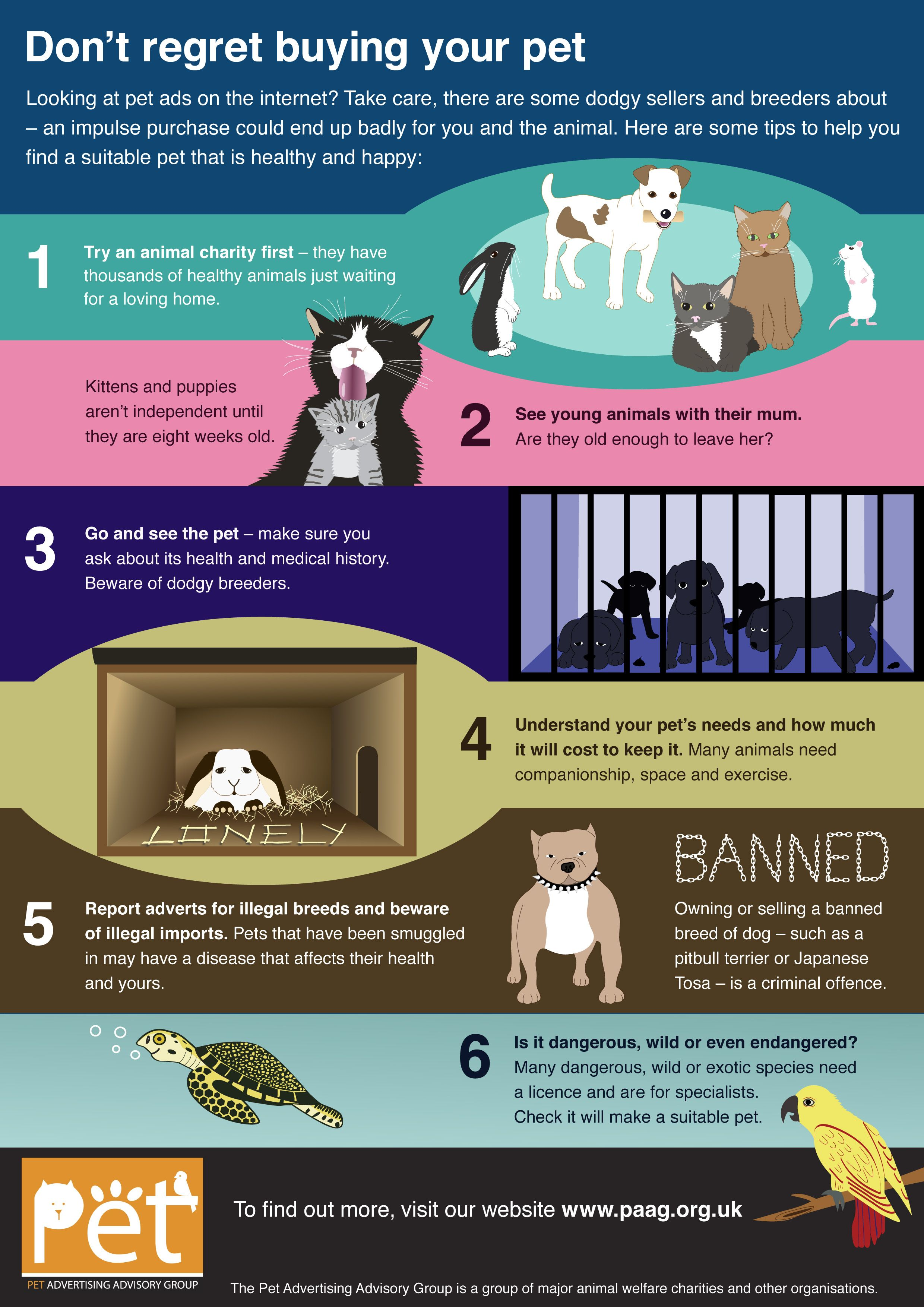 Don T Regret Buying Your Pet Cat Care Your Pet Pets