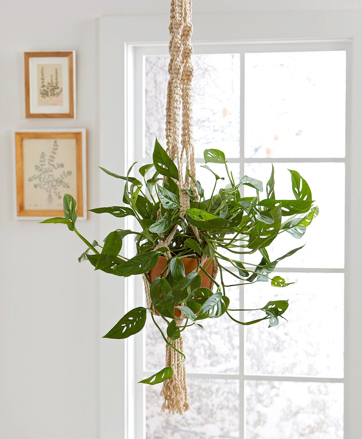 23 of Our Favorite LowLight Houseplants Hanging plants