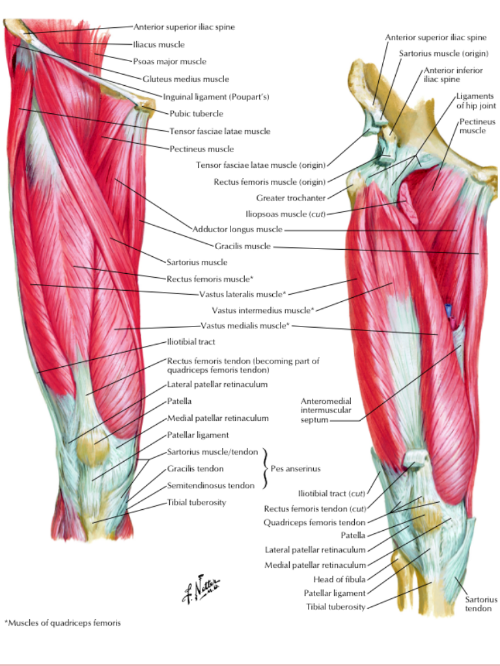 Reference Netter Atlas Of Human Anatomy Anatomy Study Guides