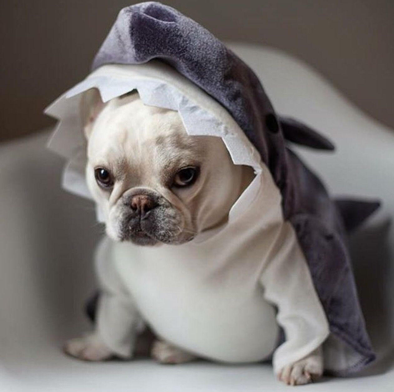 The grumpy cat has been officially dethroned. Dog shark
