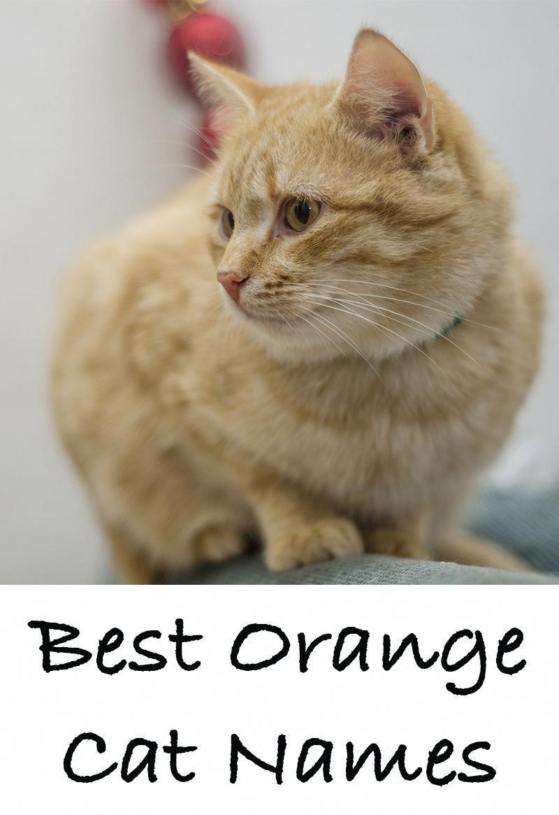Cute Cat Names Male Orange In 2020 Boy Cat Names Cat Names Girl Cat Names