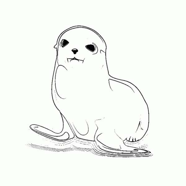 Cute Baby Seal Coloring Page Coloring Sky Coloring Pages Coloring Pictures Baby Seal