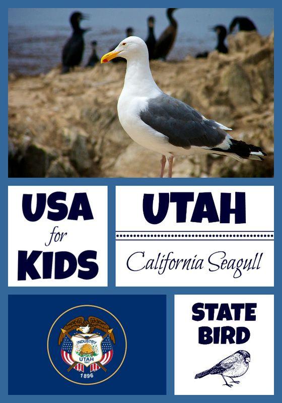 Utah State Bird