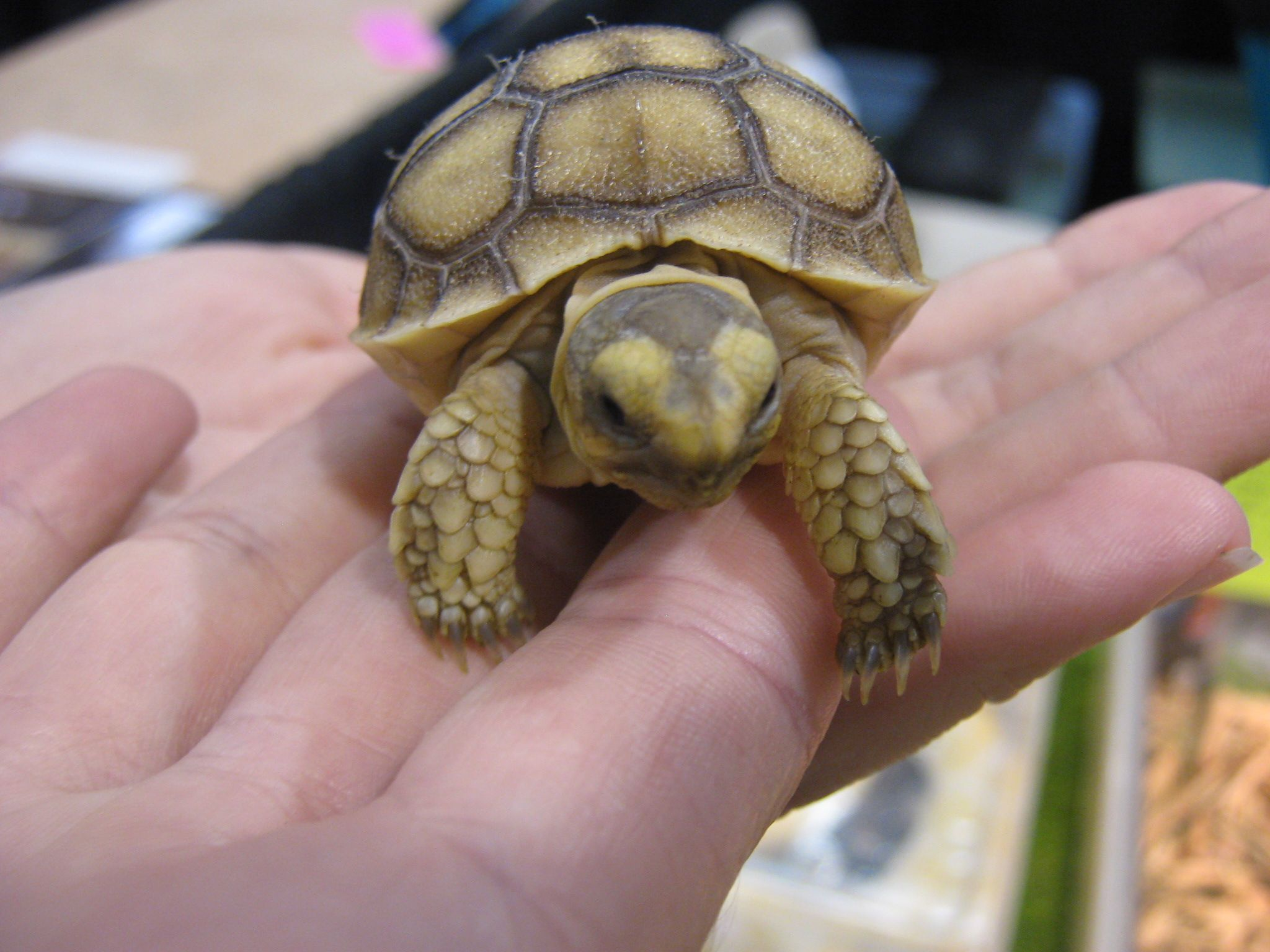 TIPS FOR CHOOSING PETS REPTILE TURTLE..... TURTLES ARE