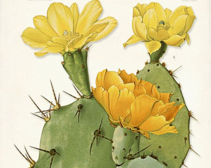 Desert Cactus Poster, Cactus Print, Yellow Cactus Blossom, Botanical ...