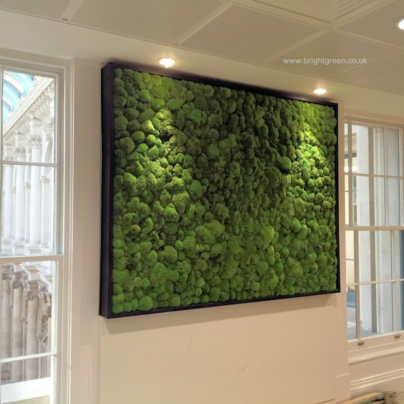 Preserved Bun Moss Wall Panel With A Black Frame In An Office Moss Wall Moss Wall Art Plant Wall