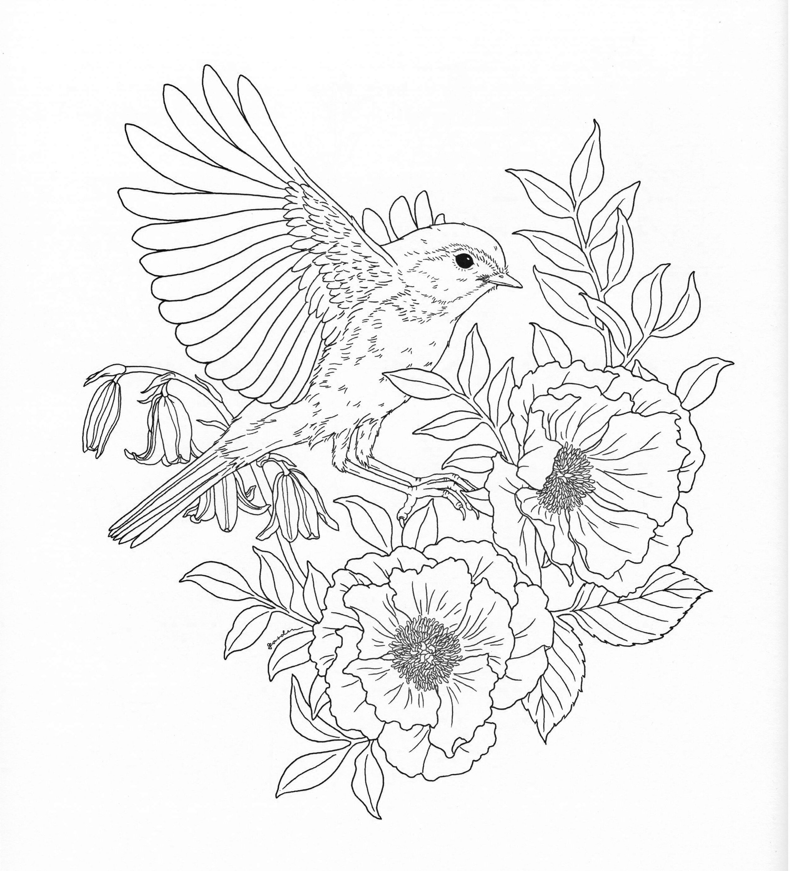 Harmony Of Nature Adult Coloring Book Pg 26 Bird Coloring Pages