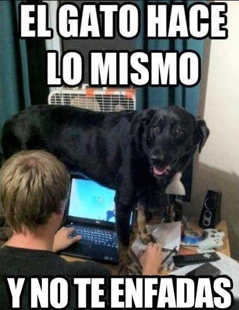 Es Cierto Perros Gatos Humor Divertido Sobre Animales Memes Perros Memes Animales