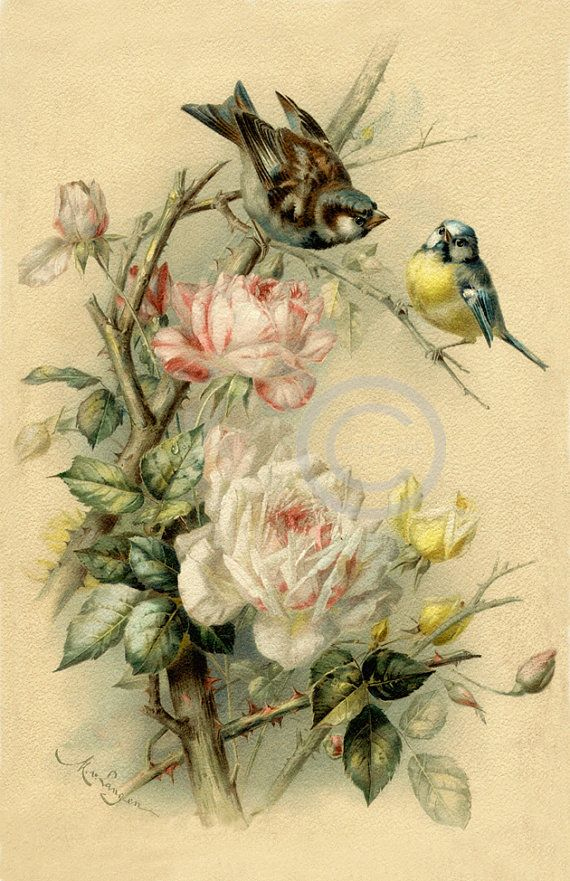 Victorian Birds and Flowers Print, Vintage Tea Roses, Garden fence ...