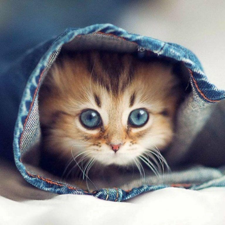Muhtesem Whatsapp Profil Fotograflari Full Hd Cute Kittens Komik Kedi Yavrulari Nadide Hayvanlar