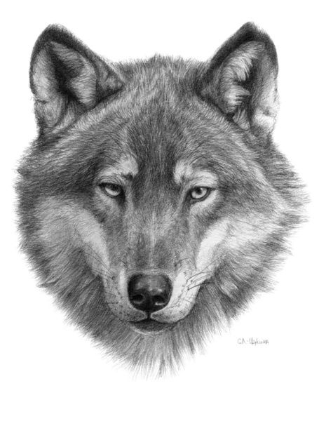 image relating to Printable Wolf Pictures known as no cost printable wolf heads Wolf Confront Drawing Wolf facial area g084