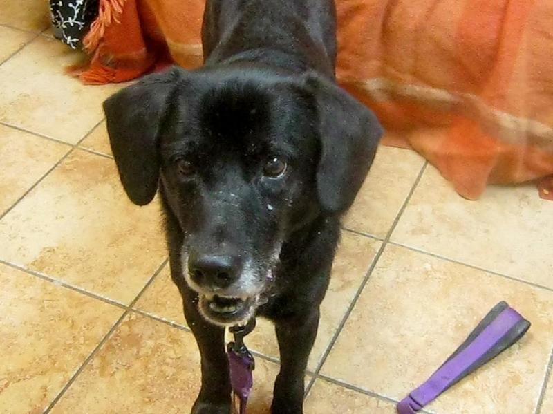 Adopt brady on animal rescue league animal rescue dog