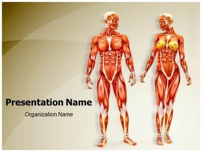 Men And Women Muscular Anatomy Powerpoint Presentation Template Is