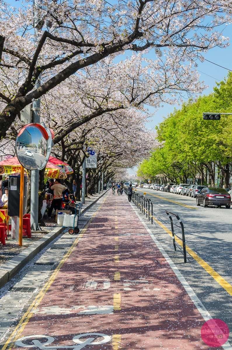 S Of Seoul South Korea Di 2020 Dengan Gambar