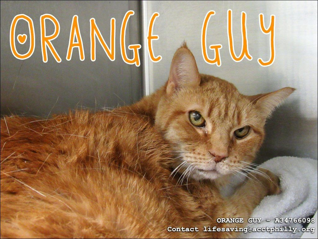 URGENT!!  Late addition ORANGE GUY needs to find RESCUE from ACCT Philly by 8pm TONIGHT. Please email Lifesaving@acctphilly.org to save him!