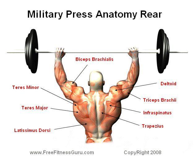 Rear Military Press Anatomy Workout Pinterest Anatomy Workout