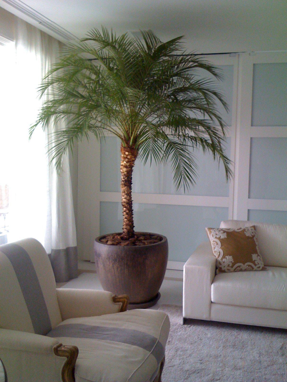 Palmeira Para Dentro De Casa Pesquisa Google Plantas De