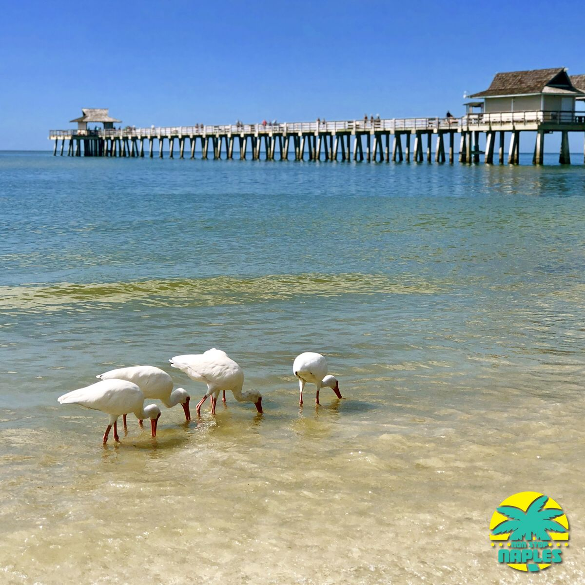 Historic Naples Pier is located on the Gulf of Mexico near ...