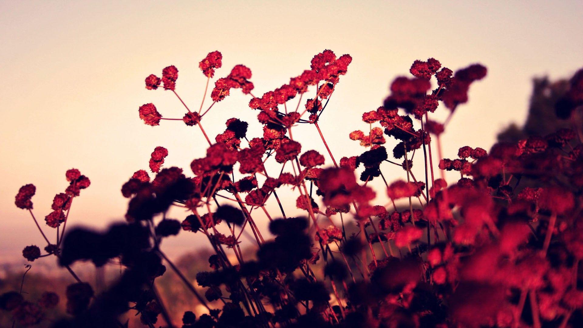 Fondos De Pantalla Hd Flores: Fondos De Escritorio Flores En Hd Gratis Para Poner En El