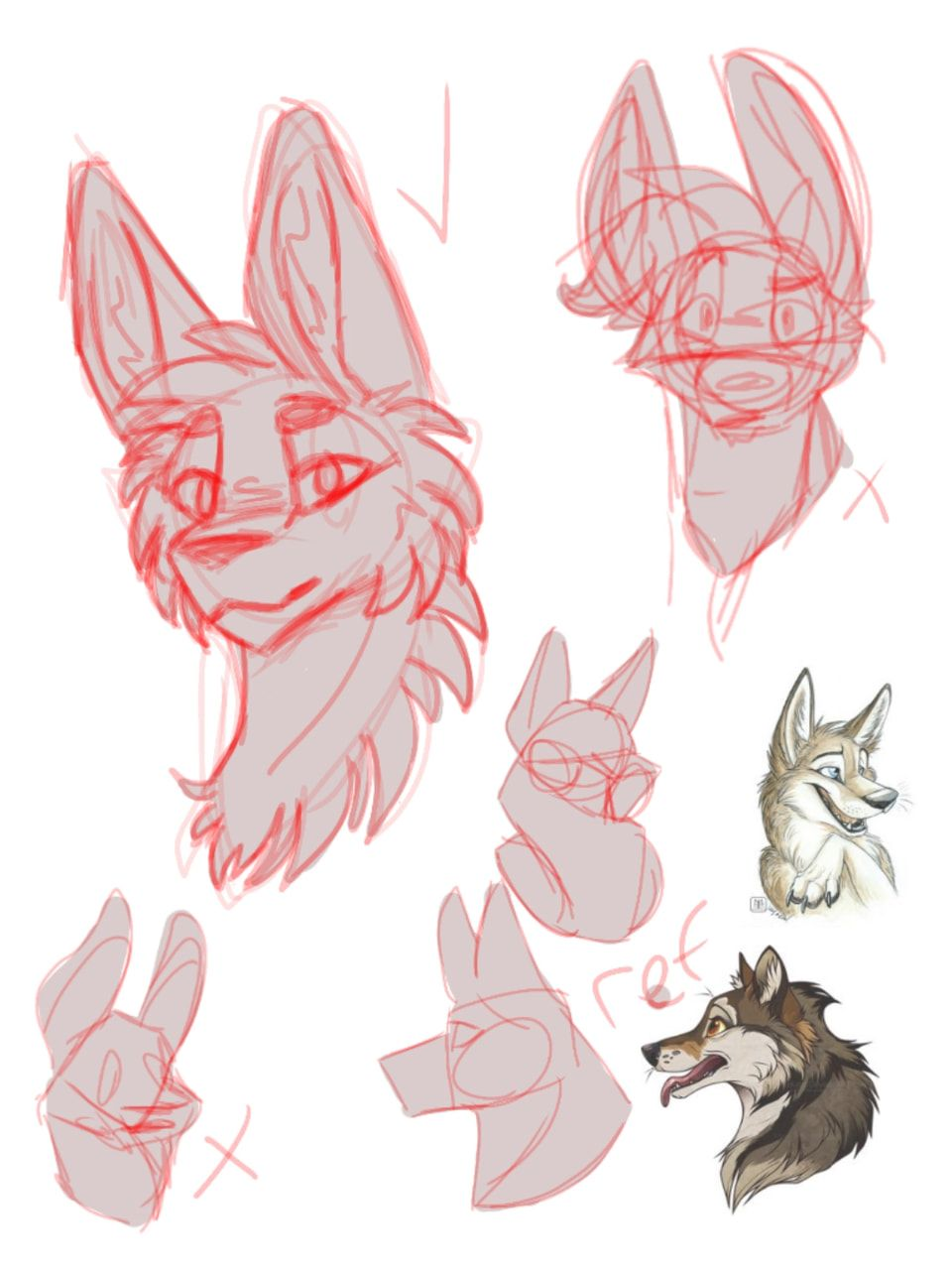 Sketch From Sony Furry Drawing Animal Drawings Furry Art