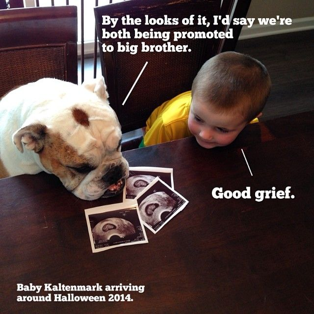 Master Everett and I are going to be Big Brothers! #LitterMates #GoDawgs