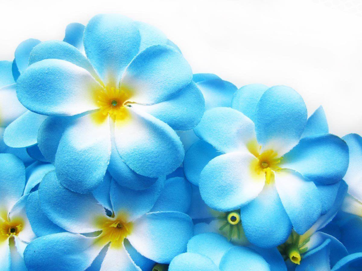 24 blue hawaiian plumeria frangipani silk flower heads 3 24 blue hawaiian plumeria frangipani silk flower heads 3 artificial flowers head fabric floral supplies wholesale lot for wedding flowers accessories izmirmasajfo