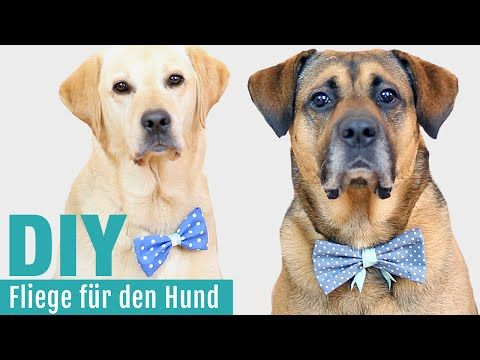 fliege schleife ohne n hen diy selber machen hundekanal youtube hund pinterest. Black Bedroom Furniture Sets. Home Design Ideas