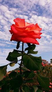 اروع واجمل صور خلفيات شاشه من الطبيعة كمبيوتر ويندوز ايفون Best Windows Desktop Backgrounds Computer Lapto Aesthetic Roses Sunflower Wallpaper Flower Aesthetic