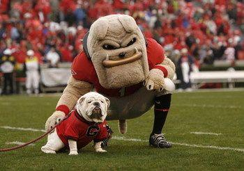 Uga X Que Georgia Bulldog Mascot Bulldog Mascot Georgia Dawgs