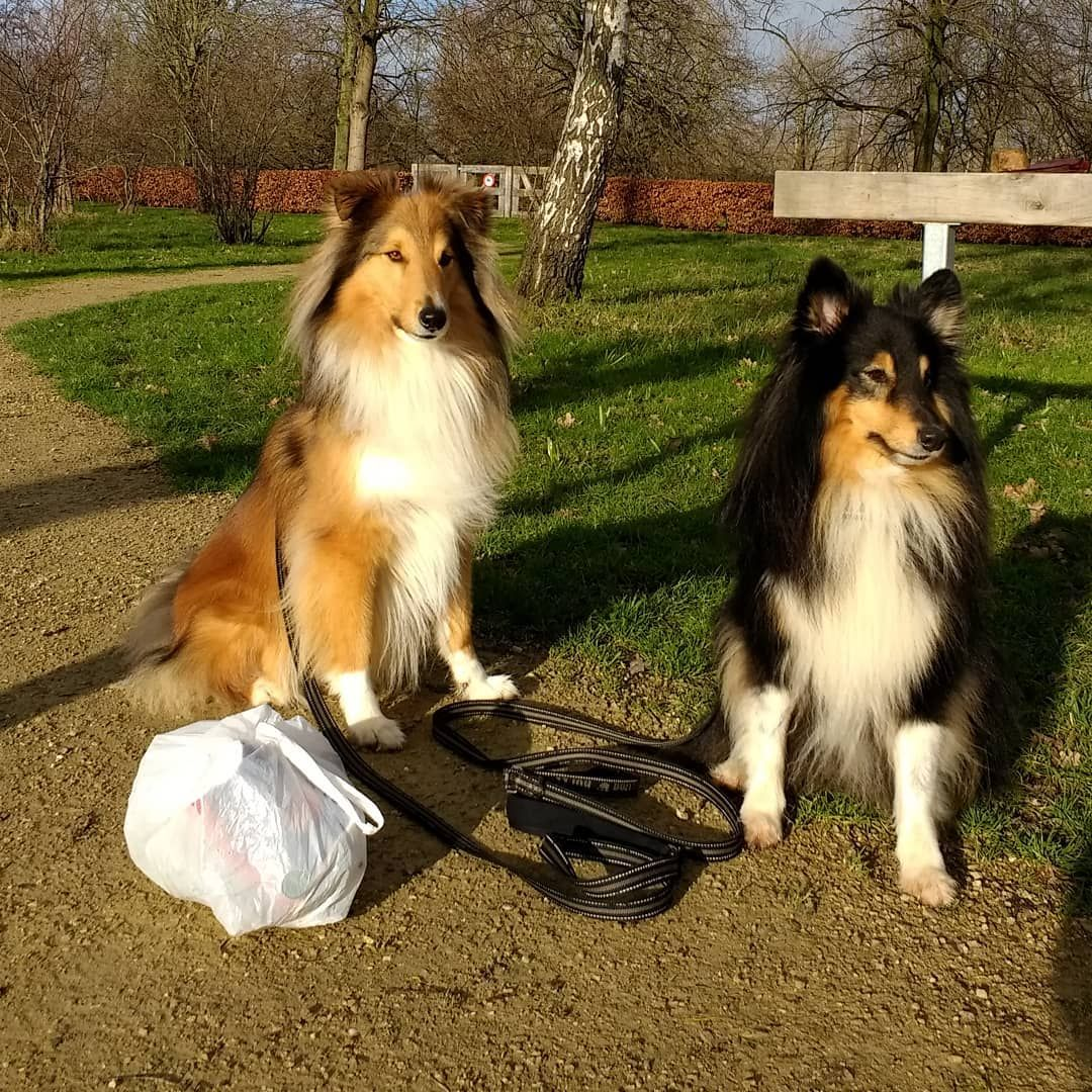 A Light Cleanwalking Trip In The Sun We Found The Usual Litte In 2020 Animals Trip Sheltie