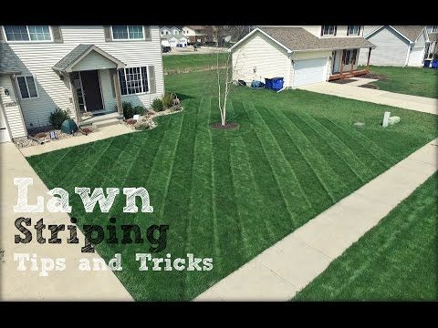 How To Get The Best Stripes In Your Lawn