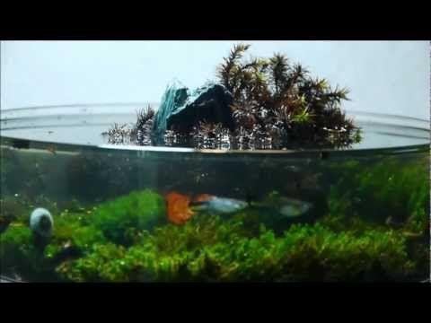 Wild island - One Hour Tanks #5
