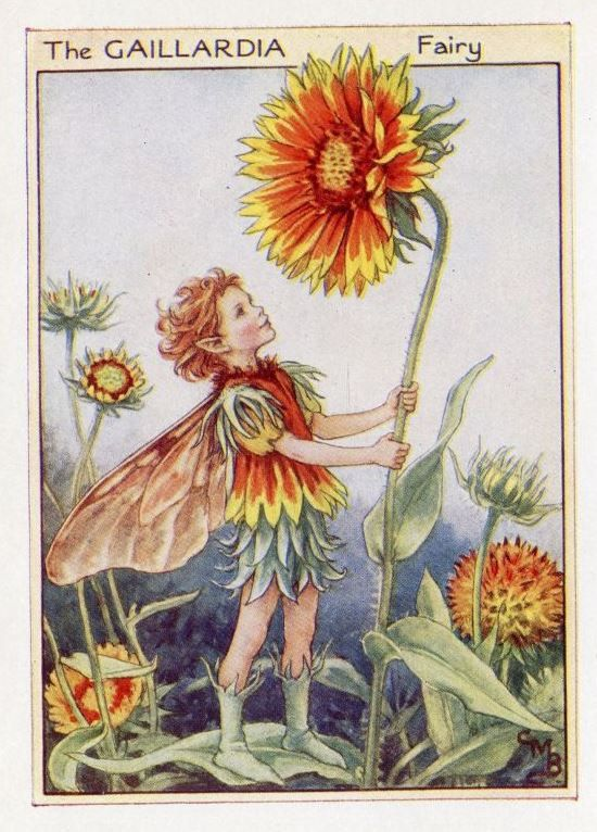 Photo of Gaillardia Flower Fairy Vintage Print 1950's Cicely Mary Bar…