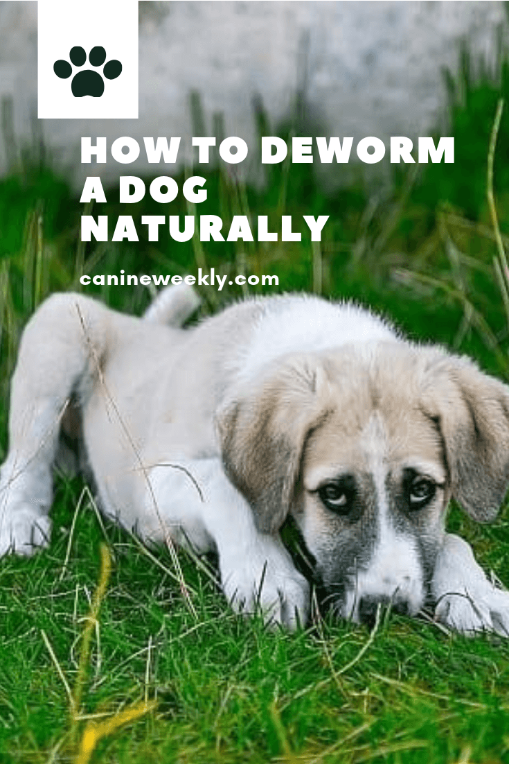8 Home Remedies For Deworming Dogs Dog Health Remedies Dogs