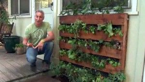 Recycling a pallet into a space saving veggie garden - another great idea from @Rachel R Goode a Greener World Television! Gives a new meaning to 'off the wall' doesn't it?!