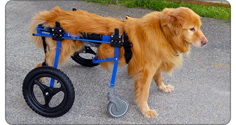 Dog Wheelchair Rental Program | the pups | Dog wheelchair, Dogs, Cats