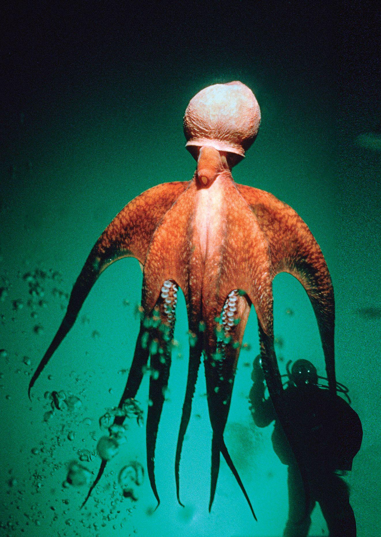 Top 100: Best Overall Diving | Underwater | Octopus, Scuba ...