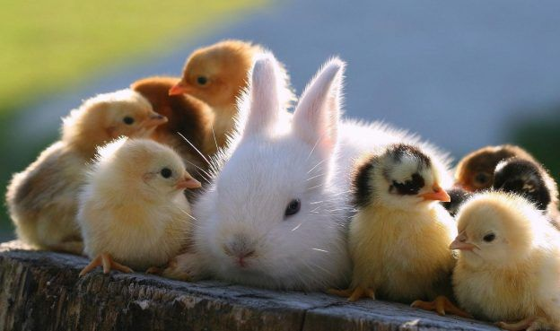Free Download Cute Baby Animal Images Baby Animals Cute Baby Animals Cute Bunny Pictures