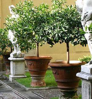 The Best Pots For A Long Term Container Planting Potted Trees