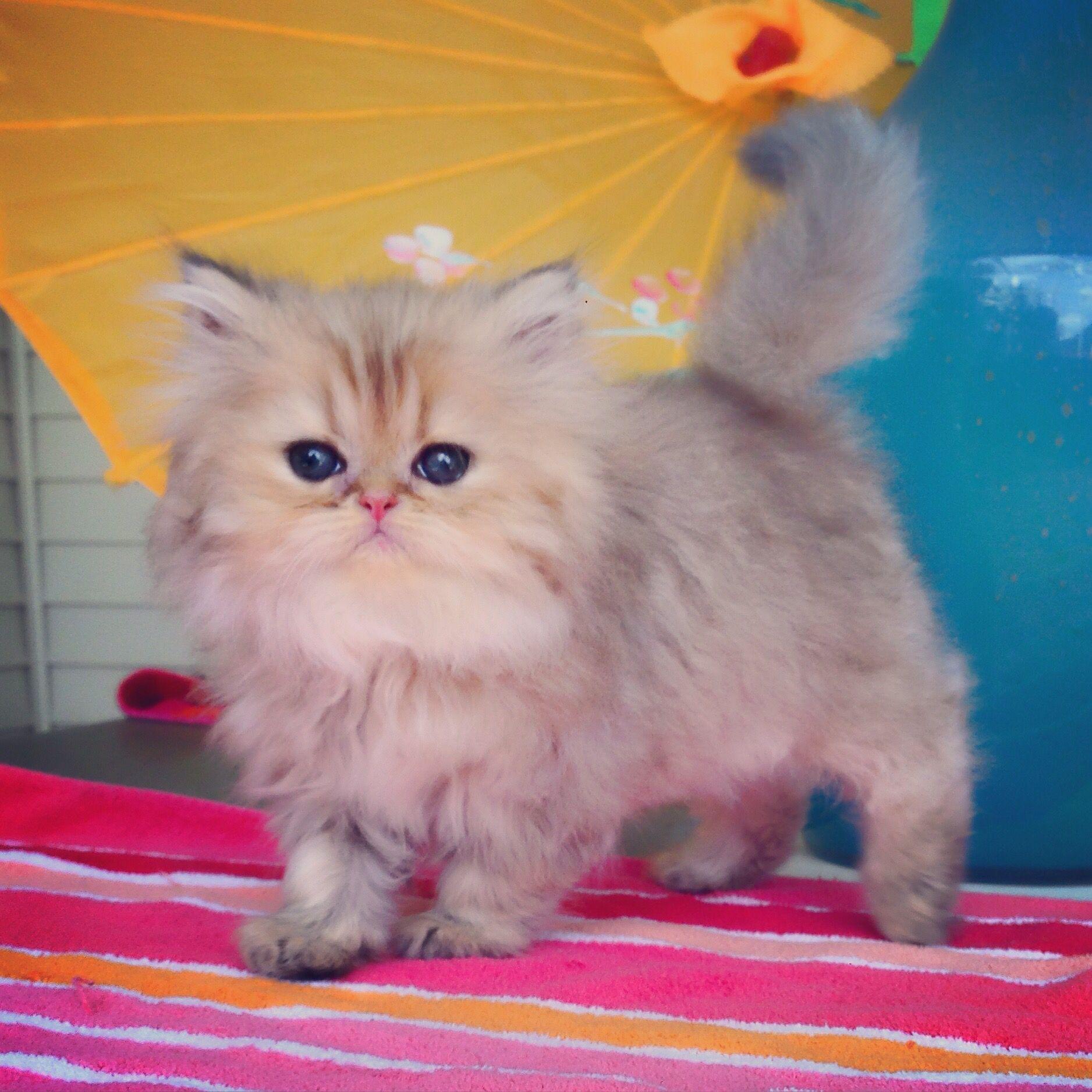 Pin by The Best Cats Li on Cutest Kitties