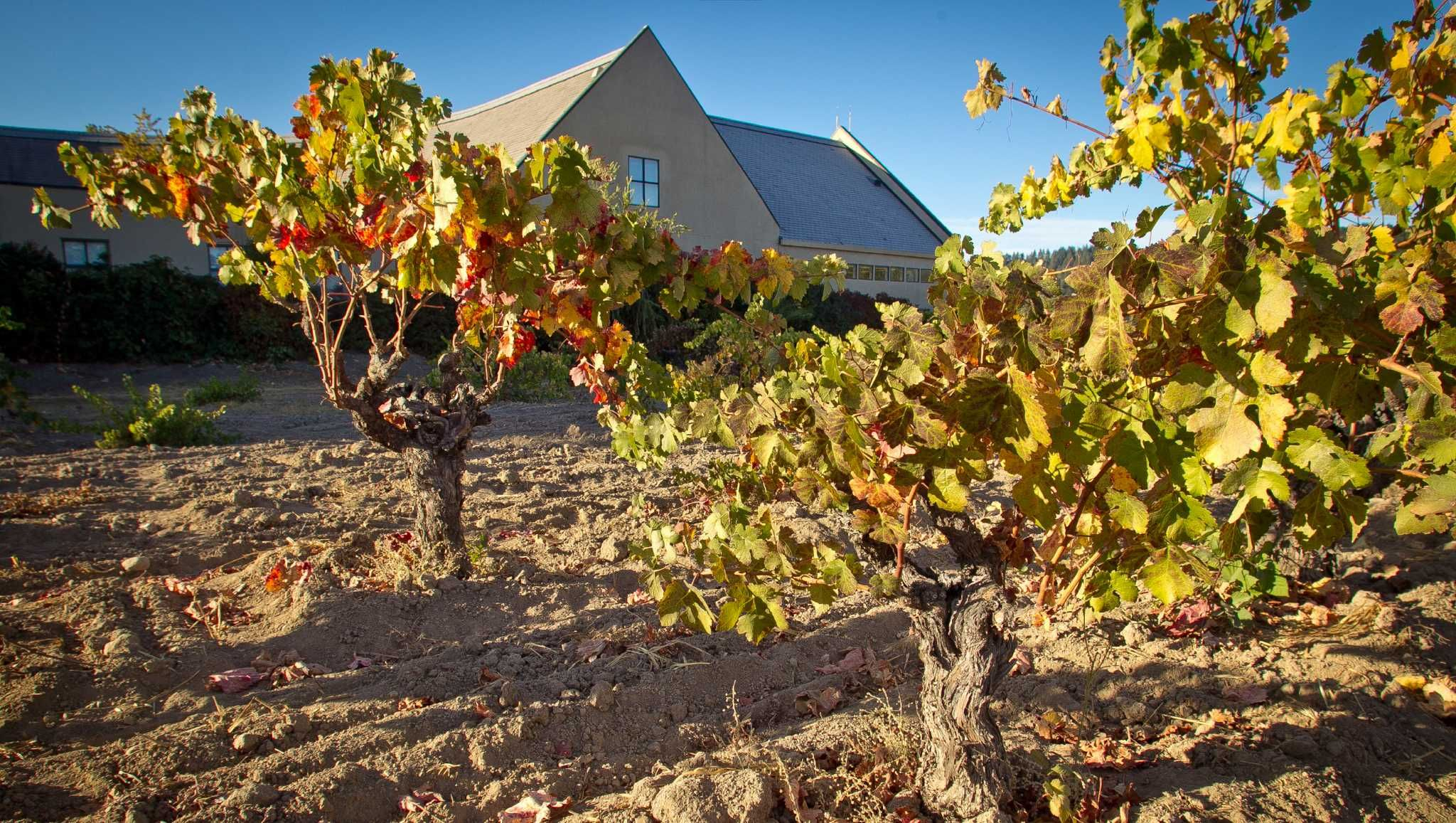 Napa Wine library pairs bookworms history buffs