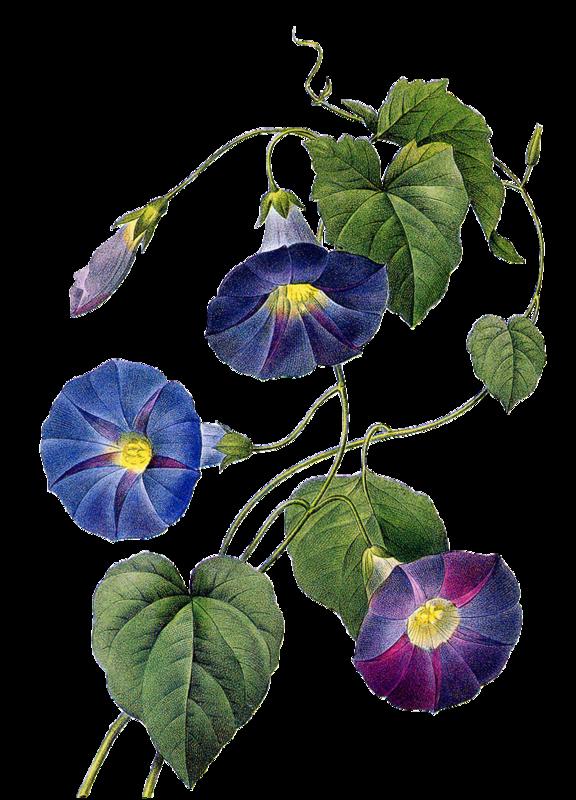 Pin de Gautam Gohil en Flowers en 2020 Dibujo botánico