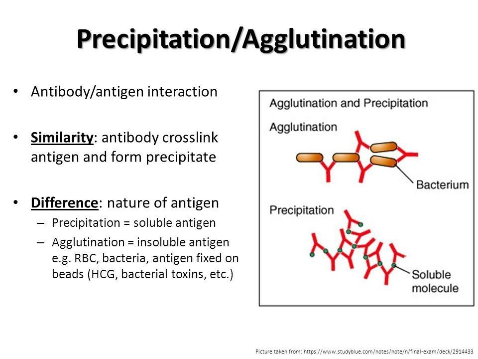 difference between agglutination and precipitation pdf