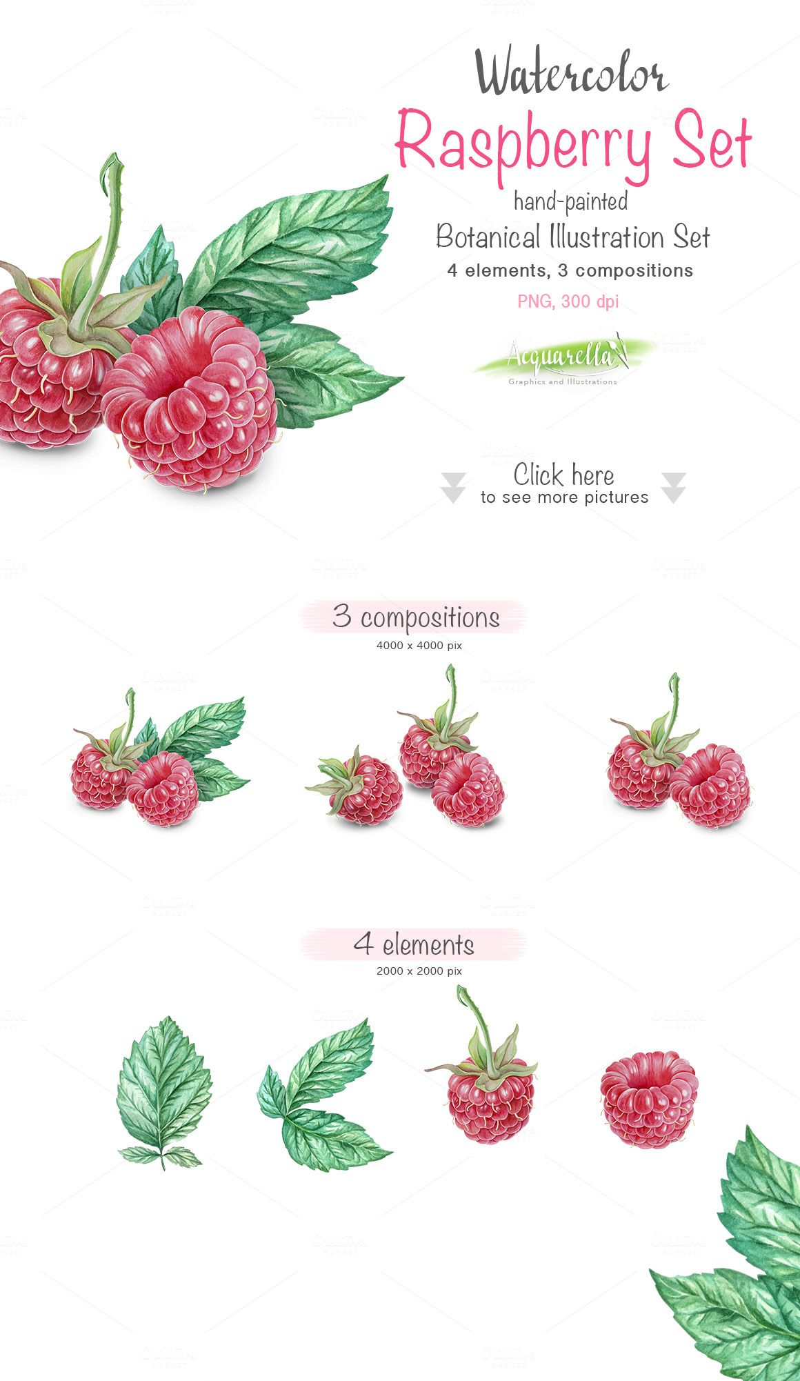 raspberry set detailed watercolor illustrations 1 сторінки