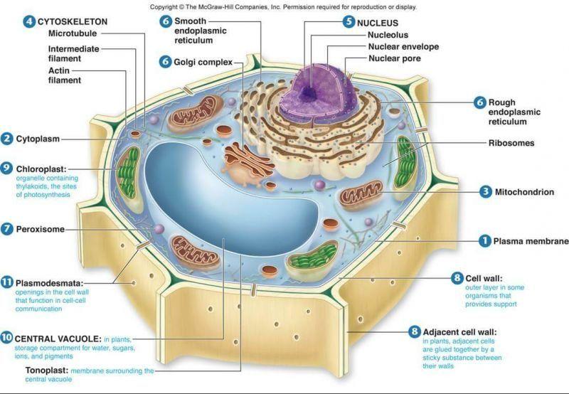Membran selmembran plasma hmmm pinterest dan membran selmembran plasma ccuart Choice Image